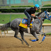 Creative Cause at Churchill Downs.<br /> Photo by Mallory Haigh