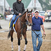 Alpha walks to the track for a training run at Churchill Downs. 5/1/2012<br /> Photo by Mallory Haigh