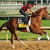 Dullahan<br /> © 2012 Rick Samuels/The Blood-Horse