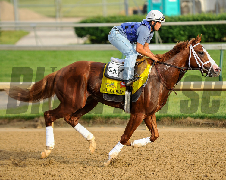 El Padrino at Churchill Downs.<br /> Photo by Mallory Haigh