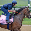 Caption:  And Why Not with Peter Brette<br /> Kentucky Derby and Kentucky Oaks contenders on the track at Churchill Downs near Louisville, Ky. on May 1, 2012.<br /> AMWorks2Arrivals5_1_12 image946<br /> PHoto by Anne M. Eberhardt