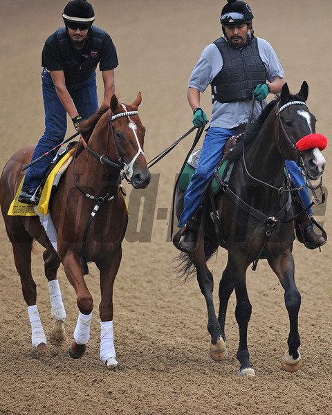 "I'll Have Another with pony ""Lava Man""<br /> Churchill Downs, Louisville, KY  Kentucky Derby 2012 5/1/12, , KY DERBY<br />  Photo by Mathea Kelley"