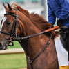 Dullahan at Churchill Downs.<br /> Photo by Mallory Haigh