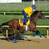 Caption:  Went the Day Well for trainer Graham Motion<br /> Kentucky Derby and Kentucky Oaks contenders on the track at Churchill Downs near Louisville, Ky. on April 27, 2012.<br /> AMWorks4_27_12 image567<br /> PHoto by Anne M. Eberhardt