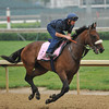 And Why Not, contender in the Kentucky Oaks, gallops at Churchill Downs.<br /> Photo by Mallory Haigh