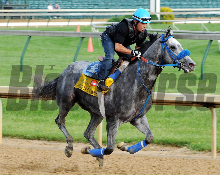 Creative Cause - Churchill Downs, May 3, 2012.<br /> Photo by Dave Harmon