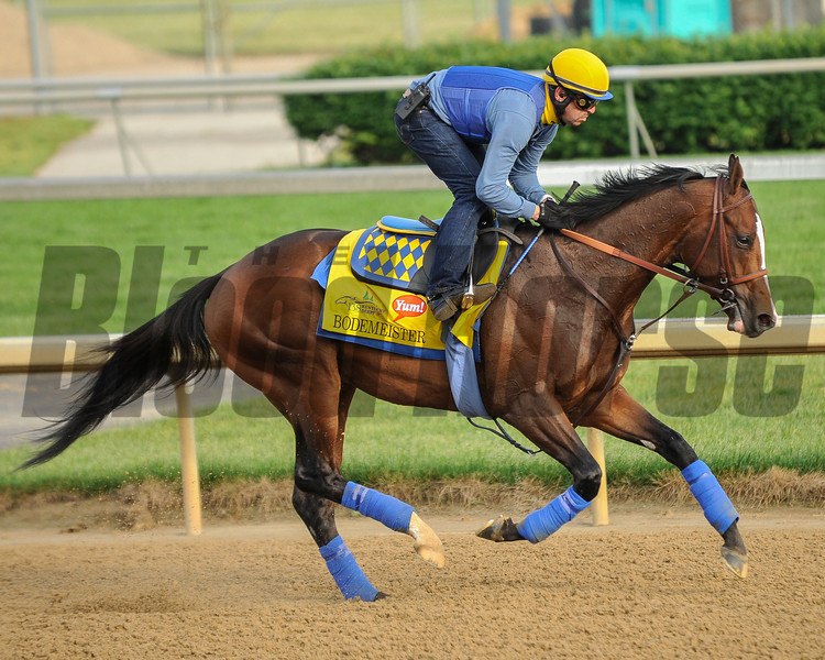 Bodemeister at Churchill Downs.<br /> Photo by Mallory Haigh