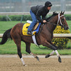 Alpha gallops at Churchill Downs. 5/1/2012<br /> Photo by Mallory Haigh