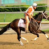 Believe You Can at Churchill Downs, Larry Jones up.<br /> Photo by Mallory Haigh