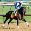 Churchill Downs, Louisville, KY, <br /> Morning work outs 4/27/12, Prospective<br /> Photo by Mathea Kelley.