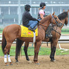 Rousing Sermon stands patiently, waiting to be turned loose on the main track at Churchill Downs. 5/1/2012<br /> Photo by Mallory Haigh