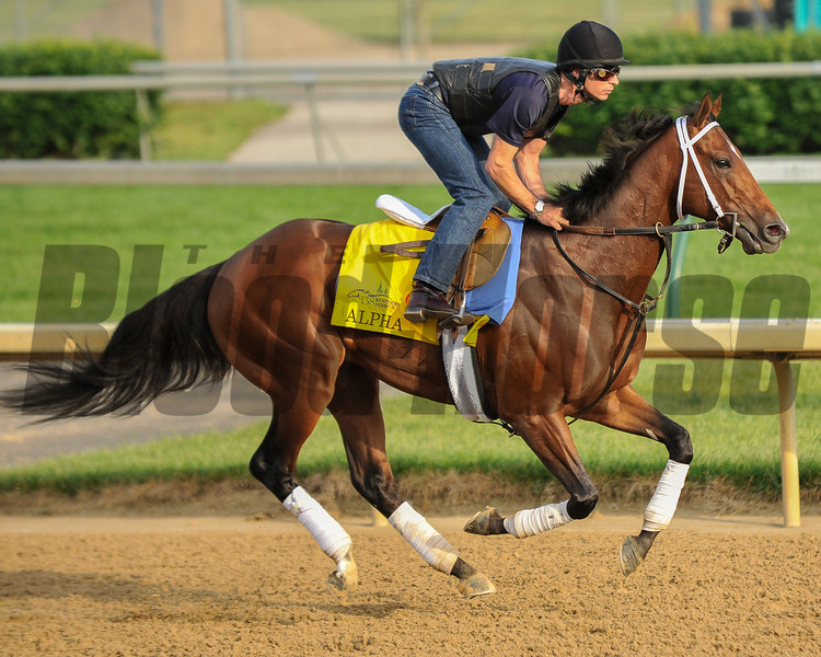 Alpha at Churchill Downs.<br /> Photo by Mallory Haigh