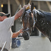 Liaison gets a bath after his work on April 29th.<br /> Photo by Mallory Haigh