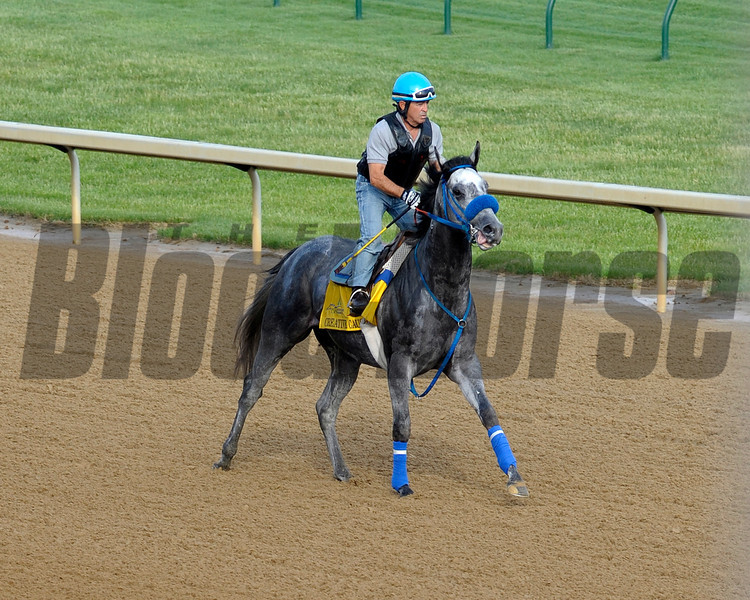 Creative Cause pre-work.<br /> Kentucky Derby and Kentucky Oaks contenders on the track at Churchill Downs 4/30/2012<br /> Photo by Anne M. Eberhardt