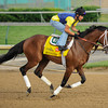 Optimizer at Churchill Downs.<br /> Photo by Mallory Haigh