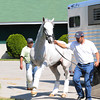 Churchill Downs, Louisville, KY photo by Mathea Kelley, Kentucky Derby 2012 5/2/12, Hansen arrives at churchill downs