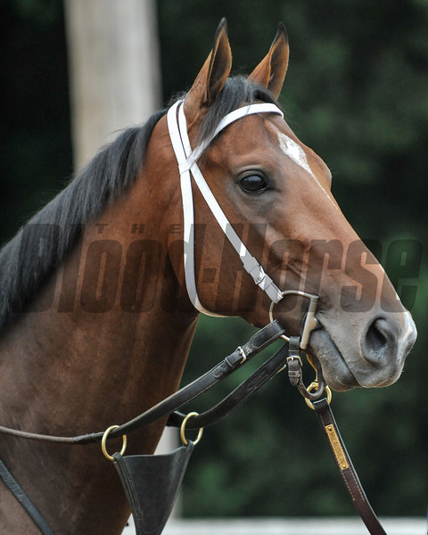 Alpha at Churchill Downs. 5/1/2012<br /> Photo by Mallory Haigh