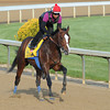 Bodemeister; works at Churchill Downs Louisville; KY 4/24/12.<br /> Photo by Mathea Kelley.