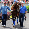 Bodemeister - Churchill Downs May 3, 2012.<br /> Photo by Dave Harmon