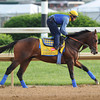 Derby Favorite Bodemeister<br /> Churchill Downs, Louisville, KY, Kentucky Derby 2012 5/3/12 <br /> Photo by Mathea Kelley