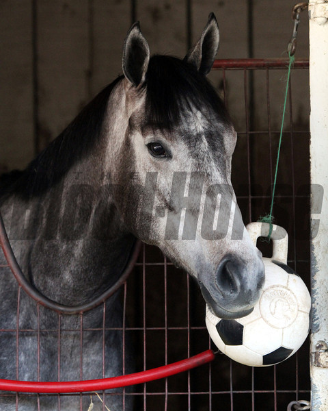 On Fire Baby at Churchill Downs on May 2, 2012.<br /> Photo by Chad Harmon.