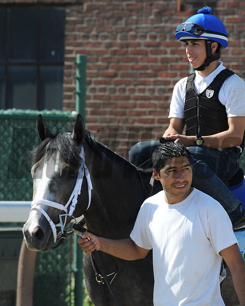 Incognito jogs at Belmont Park 6/2/2013.<br /> Coglianese Photos