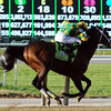 Palace Malice hits the wire in the 2013 Belmont Stakes. <br /> Dave Harmon Photo