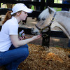 Jockey Rosie Napravnik  plays with the  horse Winston at the Kentucky Derby Museum.  Photo by Bill Luster. April 30, 2013