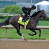 Caption:  Orb<br /> works and scenes at Churchill Downs near Louisville, Ky. on April 29, 2013, during Kentucky Derby and Kentucky Oaks week.<br /> 1Works4_29_13 image959<br /> Photo by Anne M. Eberhardt