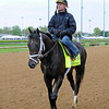 Caption: Calvin Borel on Revolutionary returns to barn after work<br /> works and scenes at Churchill Downs near Louisville, Ky. on April 27, 2013, during Kentucky Derby and Kentucky Oaks week.<br /> 1Works4_27_13 image269<br /> Photo by Anne M. Eberhardt