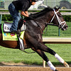 Verrazano Kentucky Derby