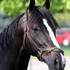 Black Onyx Head Shot Kentucky Derby