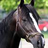 Black Onyx Head Shot Kentucky Derby