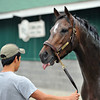 Oxbow - Churchill Downs, April 29, 2013<br /> Rick Samuels Photo