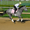 Caption: Flashy Gray<br /> works and scenes at Churchill Downs near Louisville, Ky. on April 26, 2013, during Kentucky Derby and Kentucky Oaks week.<br /> 1Works4_26_13 image933<br /> Photo by Anne M. Eberhardt