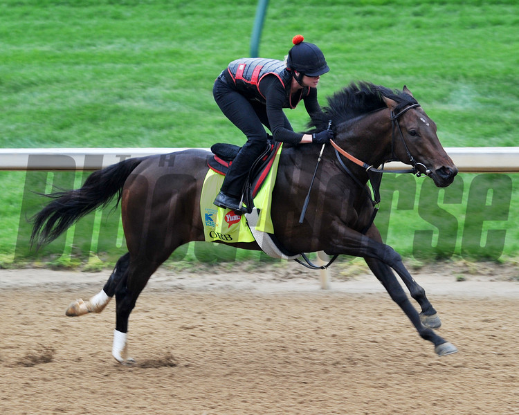 Orb, Kentucky Derby 2013<br /> Churchill Downs, Louisville KY, photo by Mathea Kelley, 4/29/13