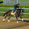 Caption: Verrazano<br /> works and scenes at Churchill Downs near Louisville, Ky. on April 26, 2013, during Kentucky Derby and Kentucky Oaks week.<br /> 1Works4_26_13 image765<br /> Photo by Anne M. Eberhardt