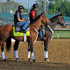 Caption: Goldencents<br /> works and scenes at Churchill Downs near Louisville, Ky. on April 30, 2013, during Kentucky Derby and Kentucky Oaks week.<br /> 2Works4_30_13 image178<br /> Photo by Anne M. Eberhardt