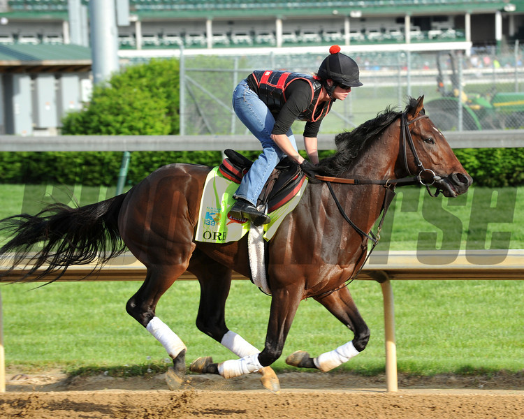 Orb, Kentucky Derby 2013 Churchill Downs; Louisville; KY photo by Mathea Kelley. 5/2/13;