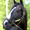 Black Onyx Kentucky Derby