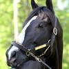 Black Onyx Kentucky Derby