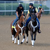 Caption:  Goldencents on track for the first time <br /> works and scenes at Churchill Downs near Louisville, Ky. on April 28, 2013, during Kentucky Derby and Kentucky Oaks week.<br /> 3Works4_28_13 image536<br /> Photo by Anne M. Eberhardt