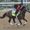 Palace Malice, Kentucky Derby 2013<br /> Churchill Downs, Louisville KY, photo by Mathea Kelley, 4/29/13