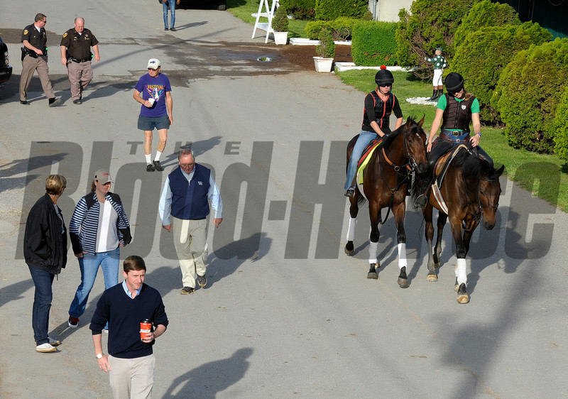 Caption:  Orb walks to the track with his connections, Mr and Mrs. Shug McGaughey and son Chip (foreground) and Daisy Phipps (bluejeans)<br /> works and scenes at Churchill Downs near Louisville, Ky. on May 2, 2013, during Kentucky Derby and Kentucky Oaks week.<br /> 1Works5_2_13 image843<br /> Photo by Anne M. Eberhardt