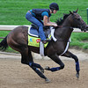 Falling Sky, Kentucky Derby 2013<br /> Churchill Downs, Louisville KY, photo by Mathea Kelley, 4/29/13