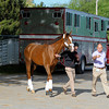 Caption:  Giant Finish arrives at Churchill<br /> works and scenes at Churchill Downs near Louisville, Ky. on May 2, 2013, during Kentucky Derby and Kentucky Oaks week.<br /> 1Works5_2_13 image920<br /> Photo by Anne M. Eberhardt