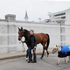 Mine That Bird and Winston<br /> Churchill Downs, Louisville KY, photo by Mathea Kelley, 4/29/13