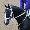 Black Onyx, Kentucky Derby 2013<br /> Churchill Downs, Louisville KY, photo by Mathea Kelley, 4/29/13