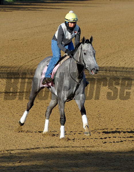 Caption: Flashy Gray<br /> Morning scenes at Churchill Downs near Louisville, Ky., on April 21, 2013.<br /> 1Works4_21_13 image335<br /> Photo by Anne M. Eberhardt