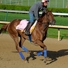 Caption:  Seaneen Girl<br /> works and scenes at Churchill Downs near Louisville, Ky. on April 28, 2013, during Kentucky Derby and Kentucky Oaks week.<br /> 3Works4_28_13 image599<br /> Photo by Anne M. Eberhardt